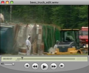 QuickTime Stream
